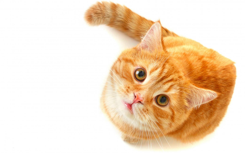 Clínica Veterinária especializada em felinos