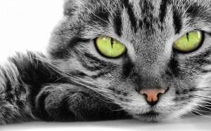 mundo dos gatos felv
